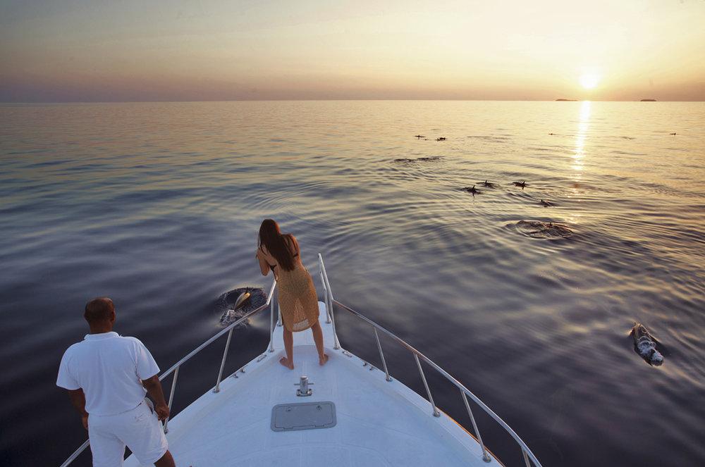 Dolphin Cruise Nosara