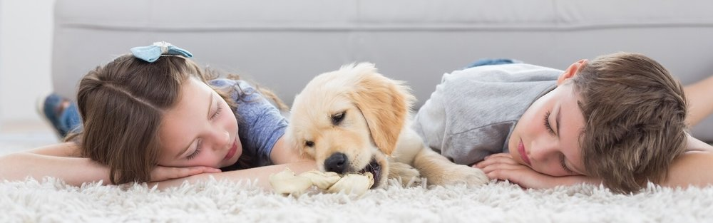 Pet Friendly Cleaning Service -