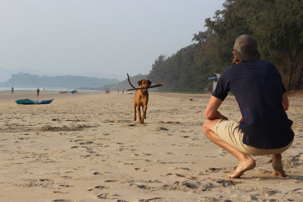 Luke distracting Tarzan with a game of fetch and singlehandedly saving the little crabs of Turtle Beach.