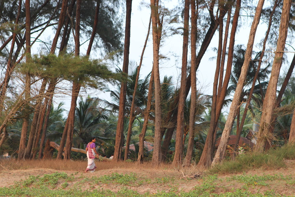 A sari brings a splash of colour to the thin wisp of pine trees unique to Turtle Beach.