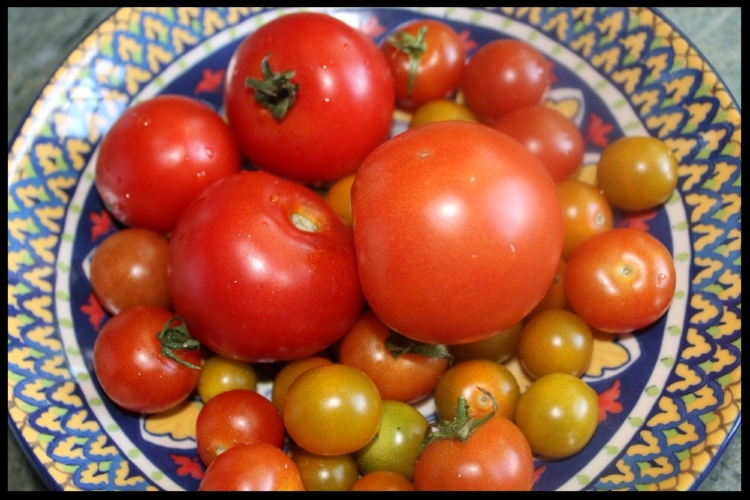 SO MANY TOMATOES, so little time! So here's the first of several tomato recipes that are quick and easy - all to get you through the summer!
