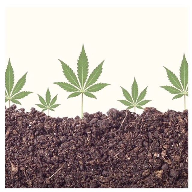 This week for #globalclimateactionsummit, we want to share with everyone about the power of regenerative hemp. ⠀⠀⠀⠀⠀⠀⠀⠀⠀ Soil restoration, carbon sequestration, water cycle remediation... the list goes on about what this amazing plant can do for our planet and ourselves. ⠀⠀⠀⠀⠀⠀⠀⠀⠀ As we grow and study the capacity the plant has on the soils of the farms we work with, we hope to lead others to producing their hemp in similar ways. ⠀⠀⠀⠀⠀⠀⠀⠀⠀ #whatillumenatesyou ⠀⠀⠀⠀⠀⠀⠀⠀⠀ Photo - @lunavolta
