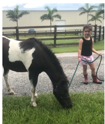 Sassy - 8 years old mini paint mareSassy came from a very sad situation along with Tonto and Spirit. We are so happy to be able to have her with us until she finds a forever home. She loves people and kids. She does have COPD so it is best for her to be a companion horse.
