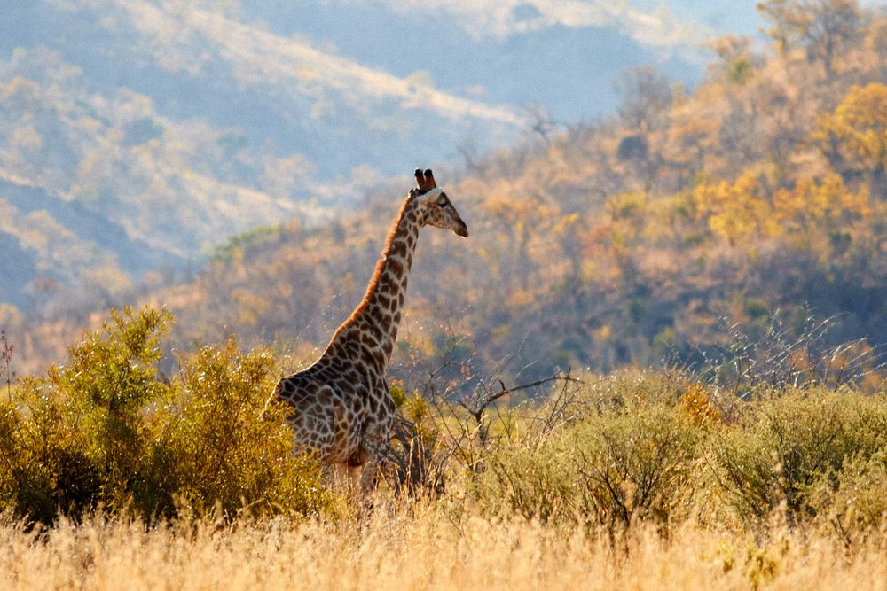 gomes_africa-68.jpg