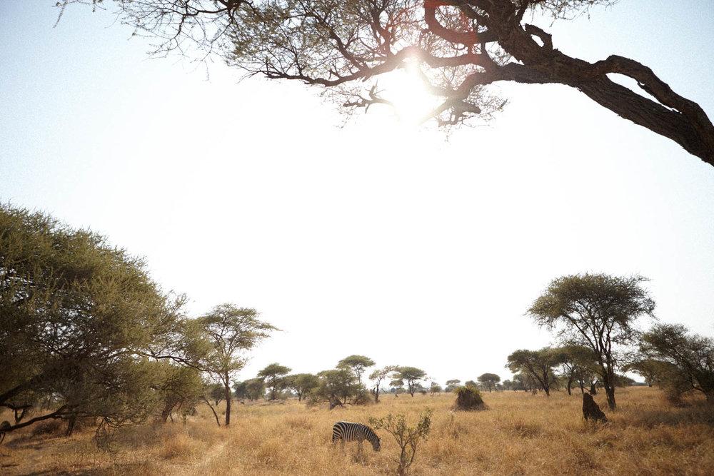 gomes_africa-194.jpg