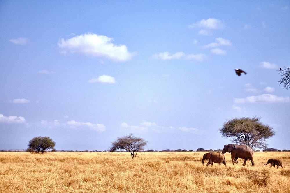 gomes_africa-197.jpg