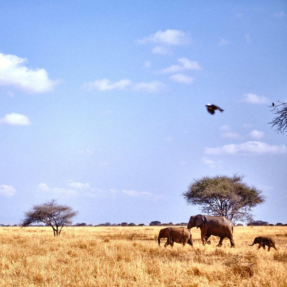 gomes_africa-198.jpg