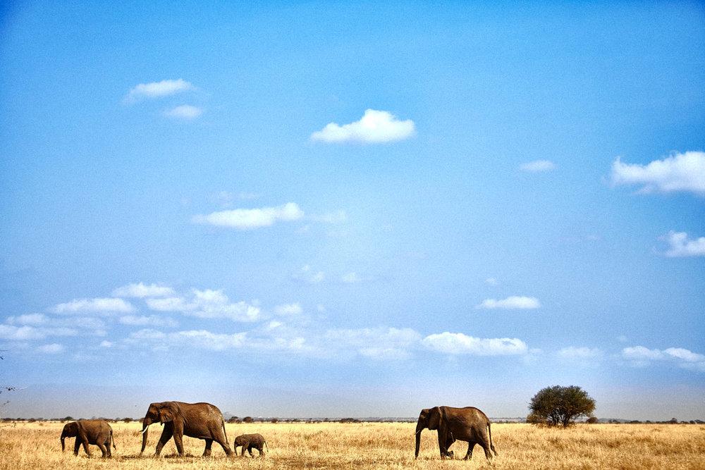 gomes_africa-200.jpg