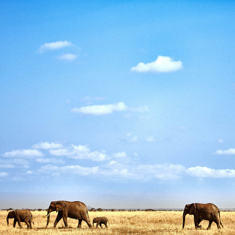 gomes_africa-201.jpg
