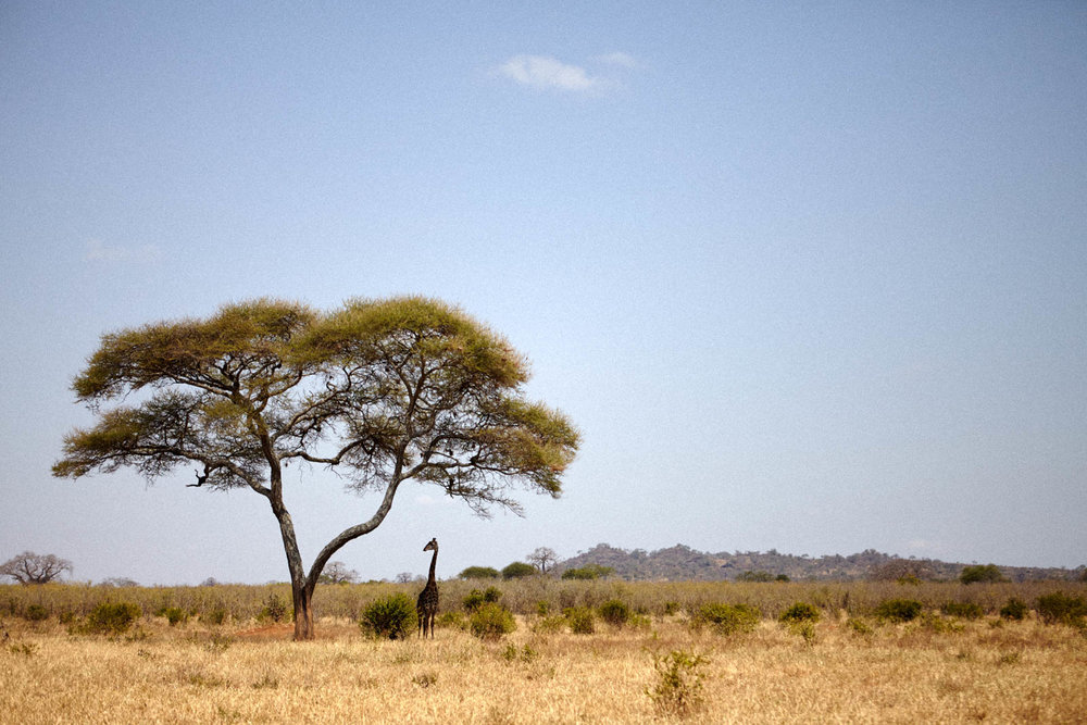 gomes_africa-202.jpg