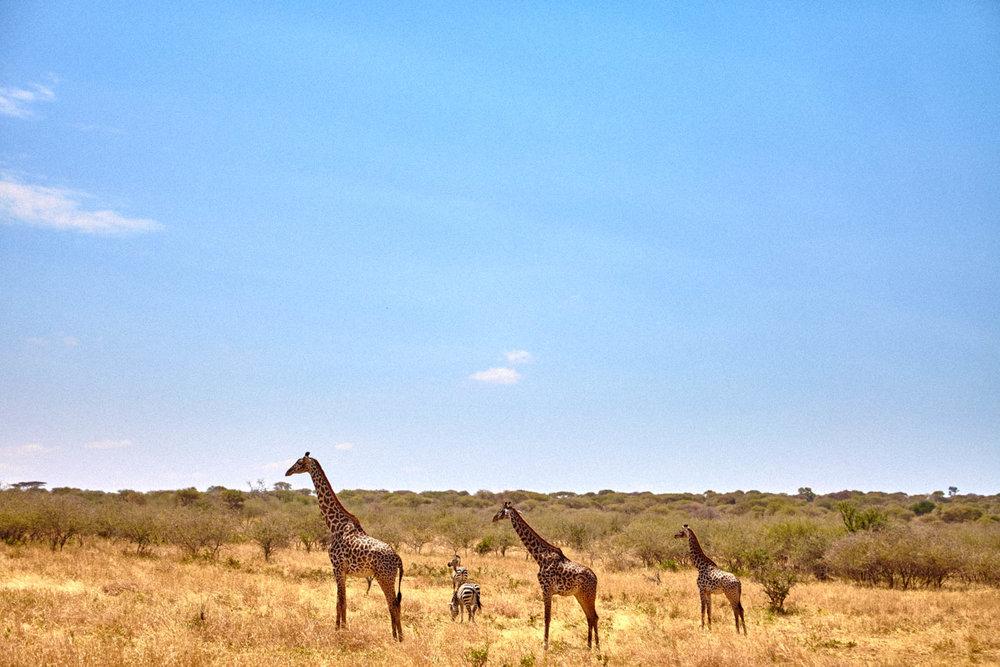 gomes_africa-203.jpg