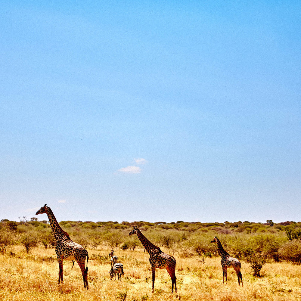 gomes_africa-204.jpg