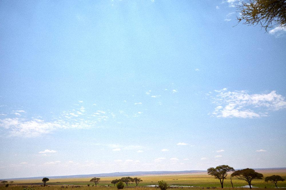 gomes_africa-207.jpg