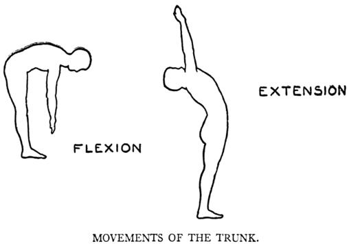 flexext.png