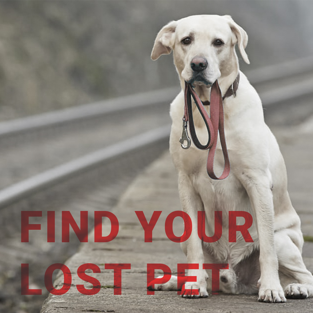 example 1 - lost pet.jpg