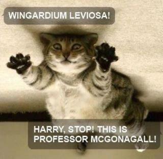 Harry Potter memes - Mcgonagall.jpg