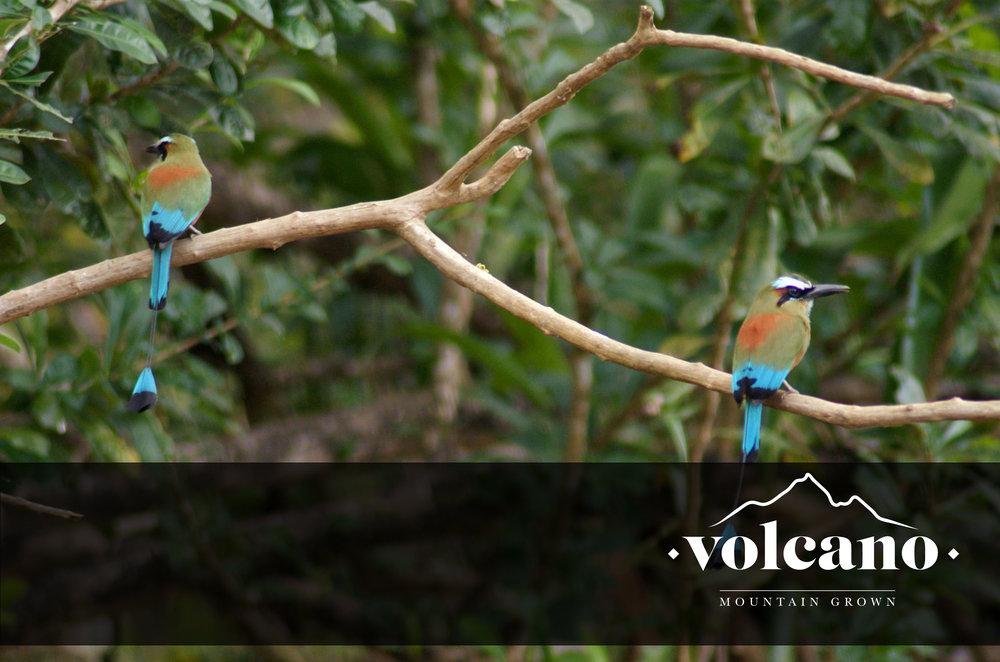 bird friendly coffee plantation .jpg