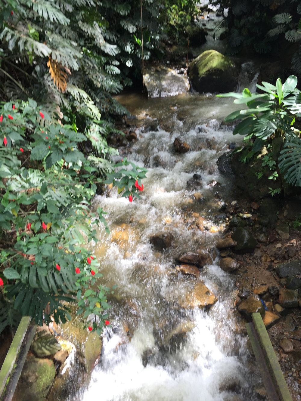 natural spring water.jpg