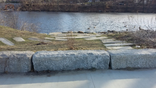 Charles River in the background around mid-morning. A gray brick walk way is visible leading up from the river. The bricks are in field of grass with some leafless bushes planted in between. In the foreground are large rocks forming a little barricade between the grass and a gray, cement, sidewalk.
