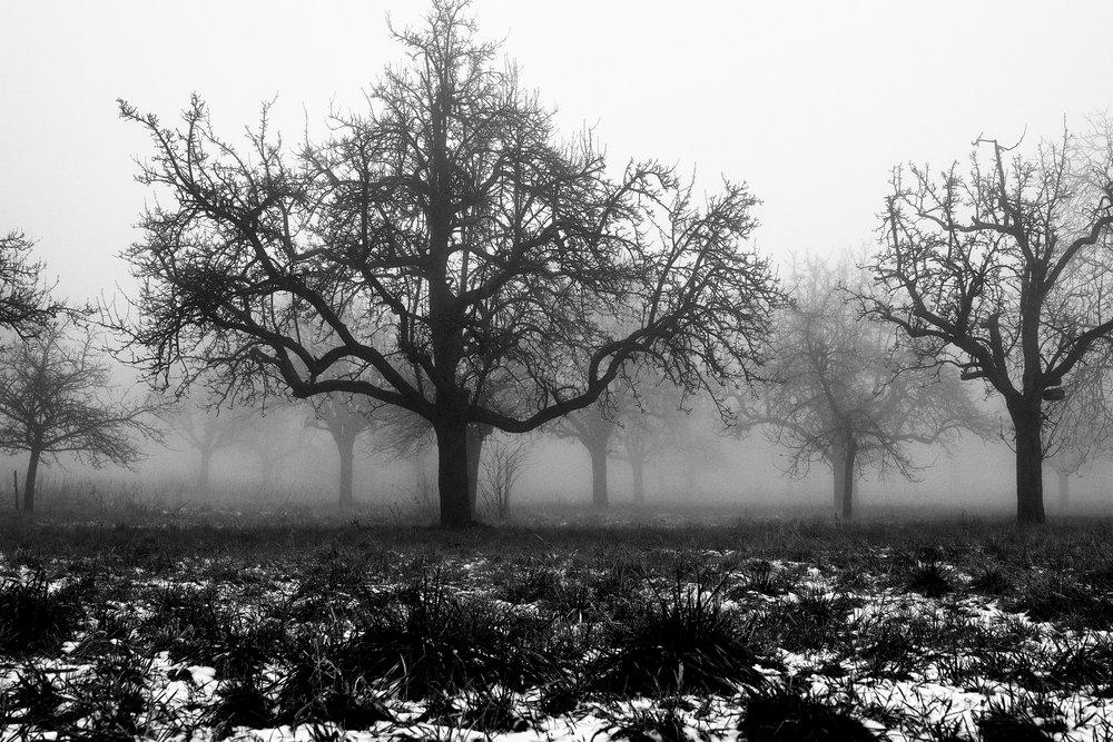50 shades of mist