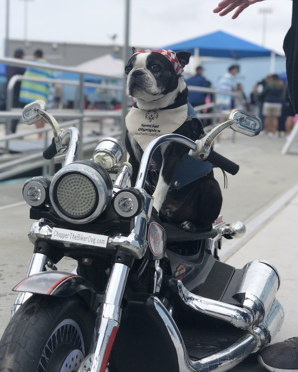 We got to meet Chopper the Biker Dog! So cool, you can check him out  here .