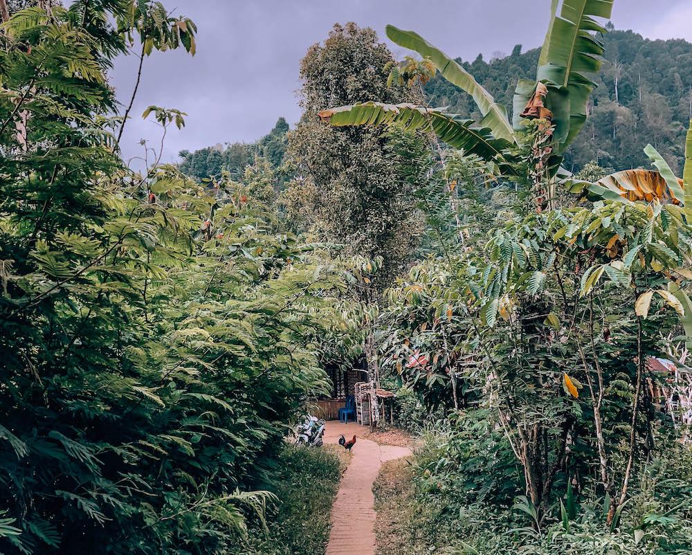 north-bali-waterfalls-munduk-3.jpg