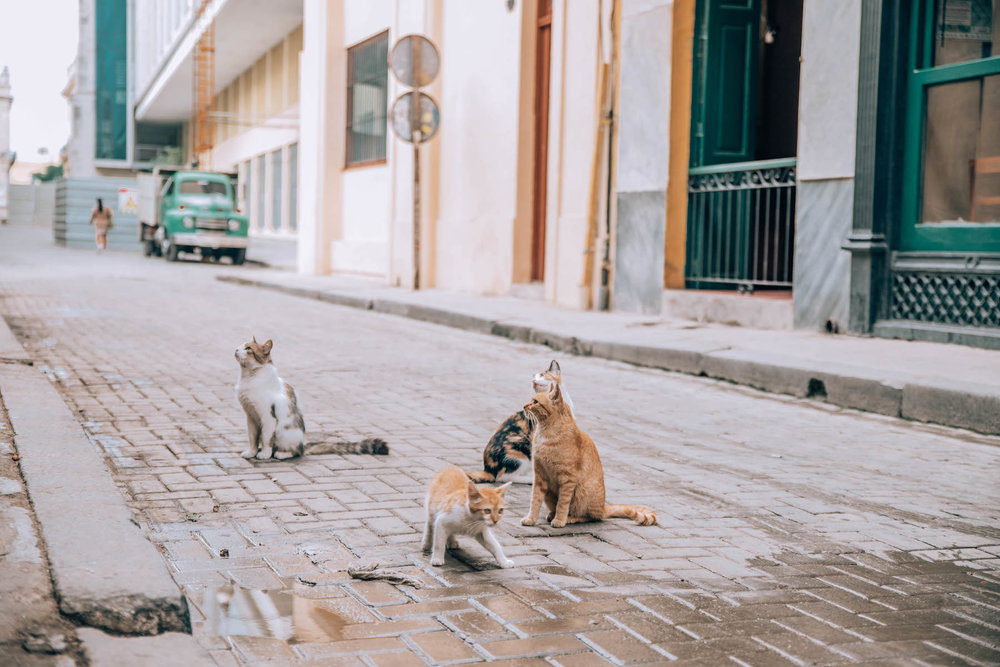 misconceptions-about-cuba-travel-4.jpeg