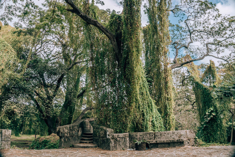 """Havana's Parque Almendares, also known as El Bosque de la Habana (""""Havana's Forest"""") is right in the Vedado neighborhood, which means you don't even need to leave the city to escape into this lush green oasis."""