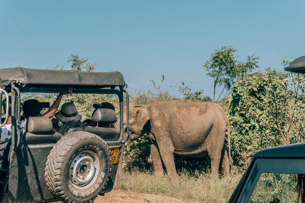 We ditched the crowd here and went off on our own, ultimately finding almost a dozen more elephants without anyone else around!