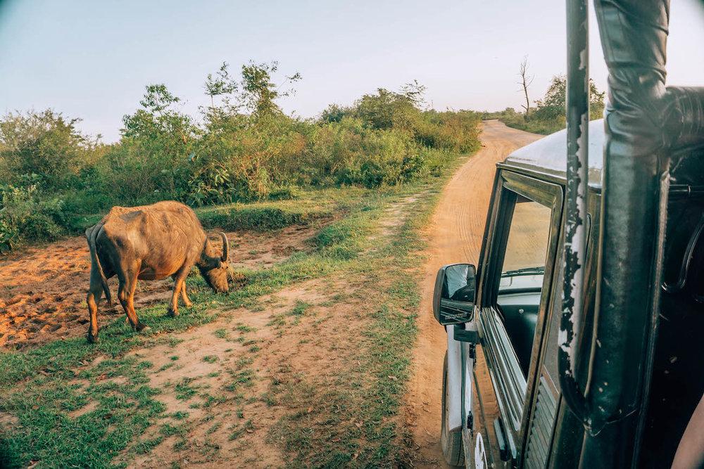 udawalawe-safari-18.jpg
