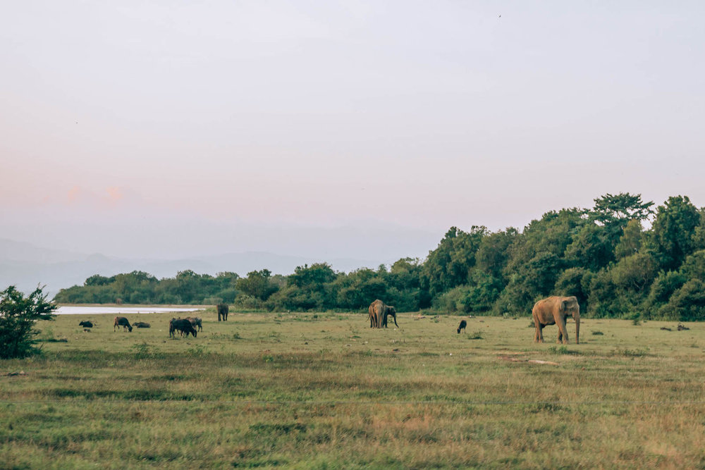 Deer, water buffalo, and elephants all gather at the water at sunset to drink and bathe. What an incredible sight to see!
