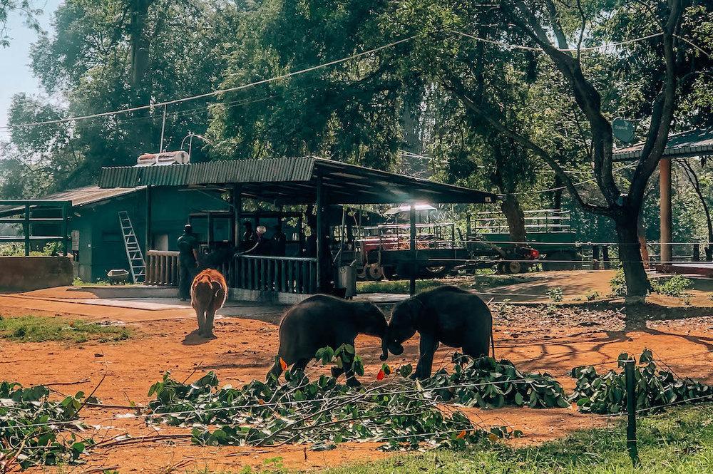 udawalawe-safari-31.jpg