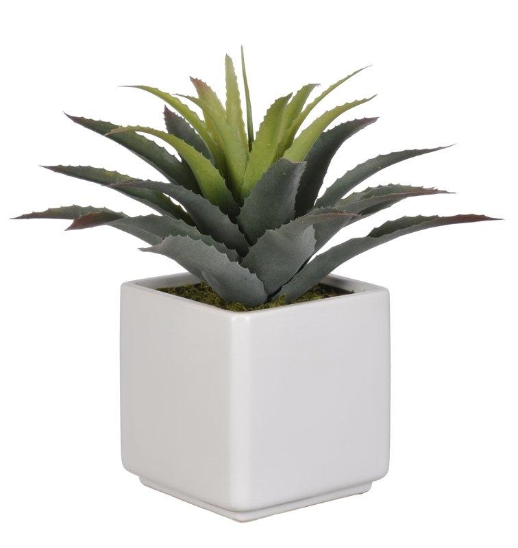 Succulent Desk Top Plant