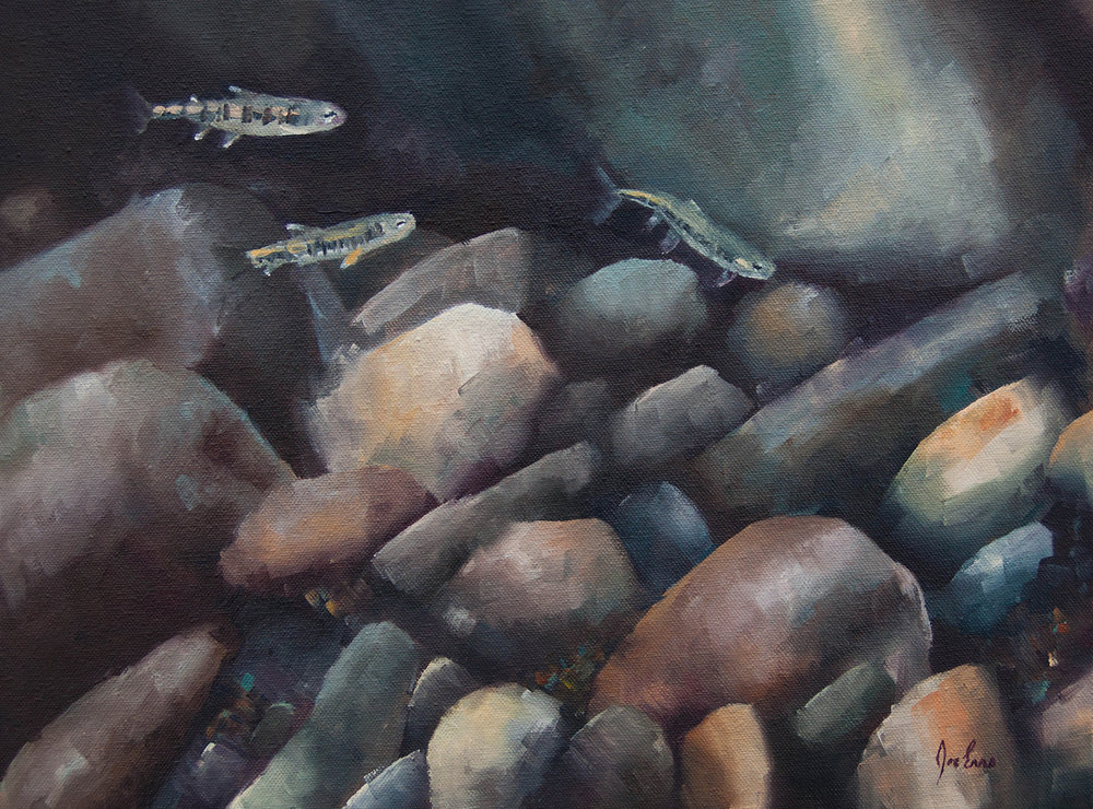 """""""Baby Rainbows 6"""" is a still life oil painting done from a photo that Joe Enns took of juvenile Rainbow Trout (or Steelhead) while snorkeling a tributary to the Okanagan River in British Columbia."""
