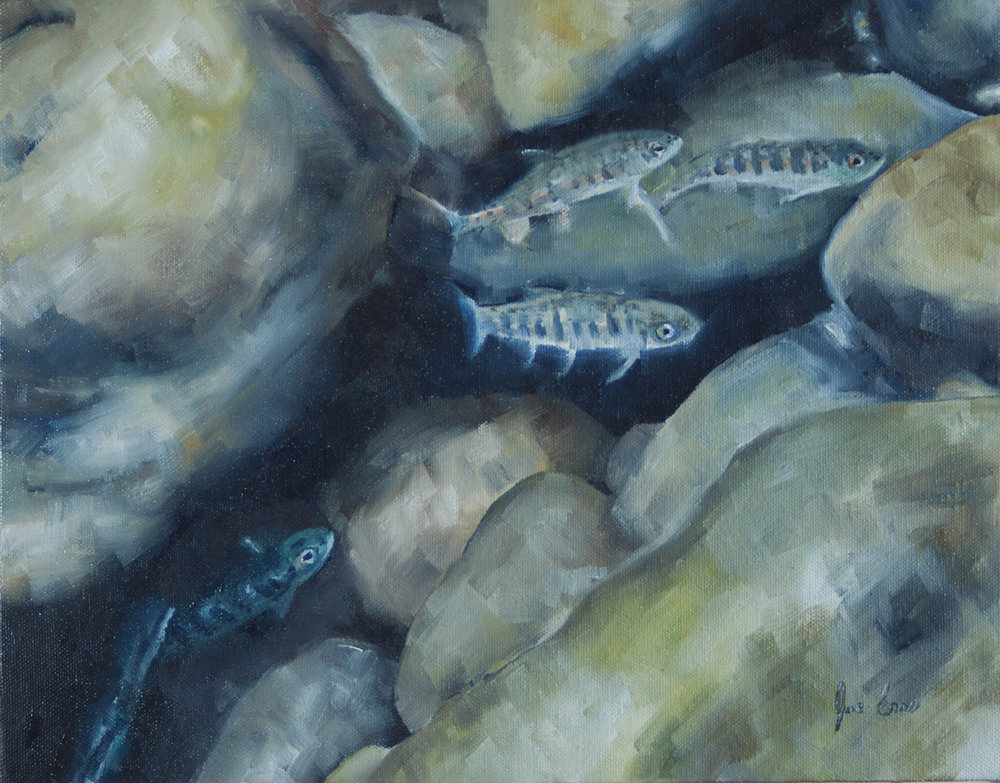 """Baby Rainbows 4"" is a still life oil painting by Joe Enns done from an underwater photo that Joe took of juvenile Rainbow Trout (or Steelhead) in a tributary of Okanagan River in British Columbia."