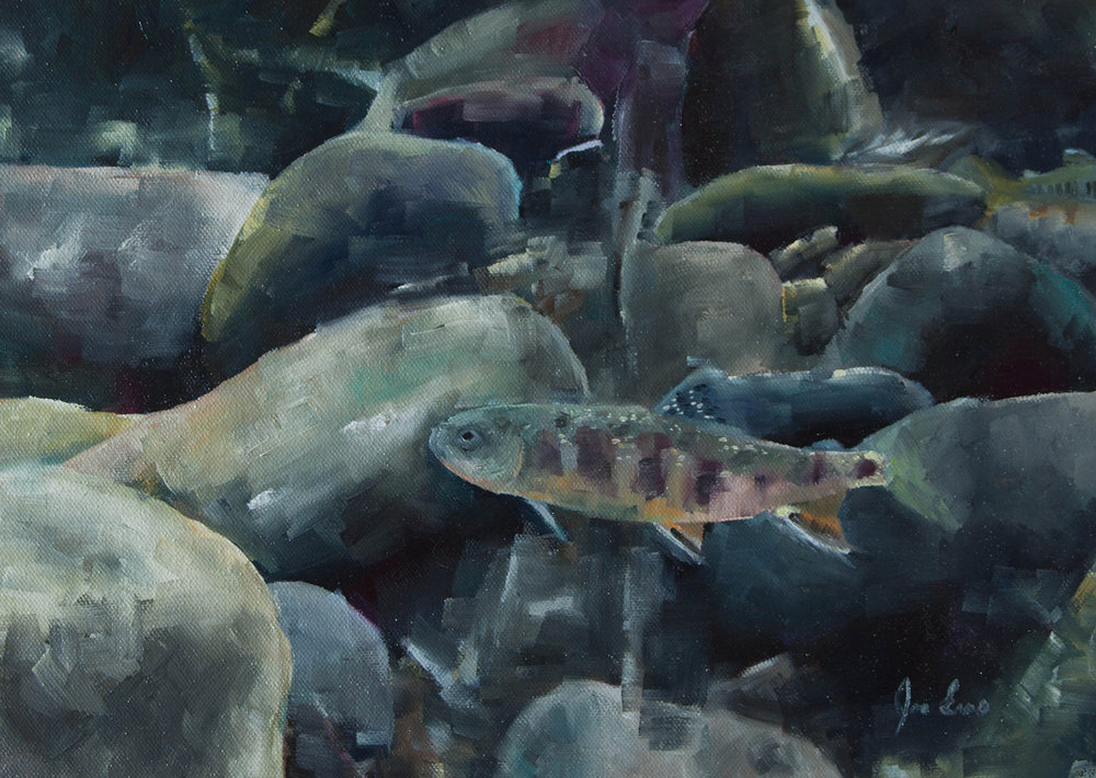"""Brook Trout 1"" is a still life oil painting by Joe Enns done from an underwater photo that Joe took of a Brook Trout in a tributary to Okanagan River in British Columbia."