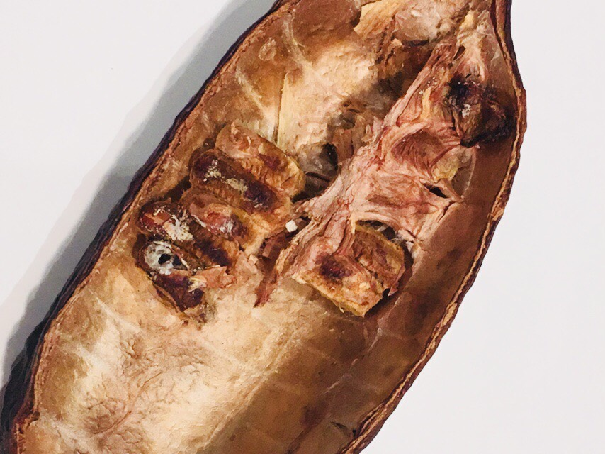 Dried cacao pod with fruit covered seeds intact. © 2018 Geoseph.com