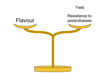 Figure 2: Balancing the important factors when propagating fine flavour cacao (Illustrated by Geoseph Domenichiello).