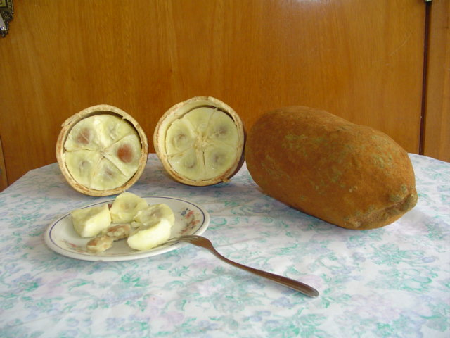 Cupuaçu Fruit (Theobroma grandiflorum). Belongs to the same Genus as cacao. (Image credit: Wikipedia)