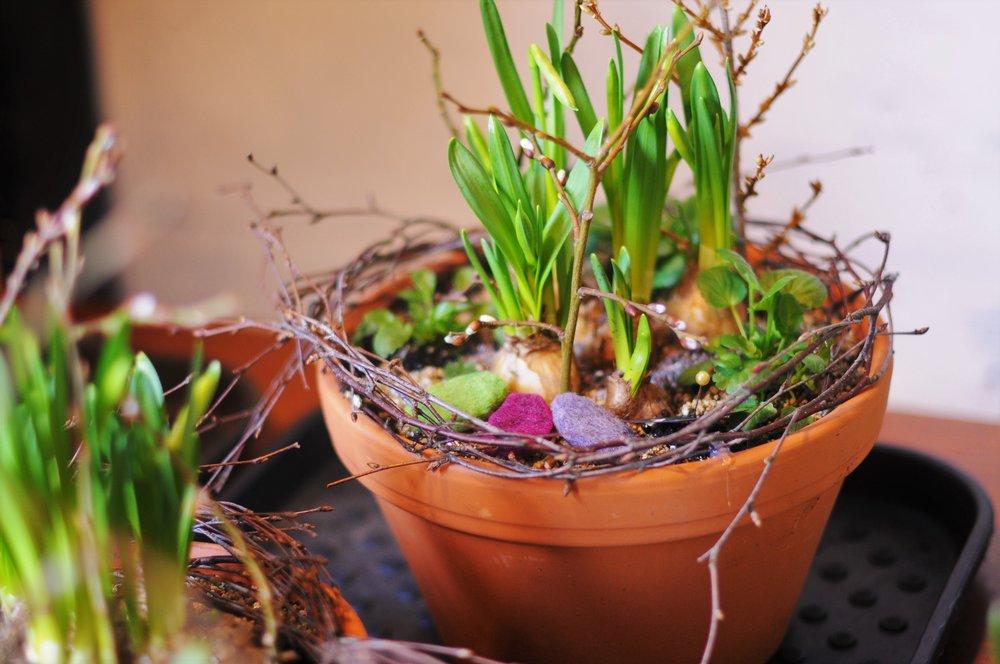 påskgrupp - påskplantering