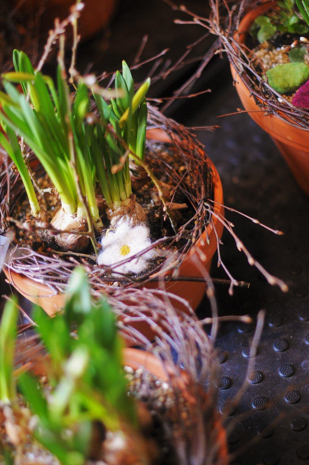 påskgrupper och påskplanteringar