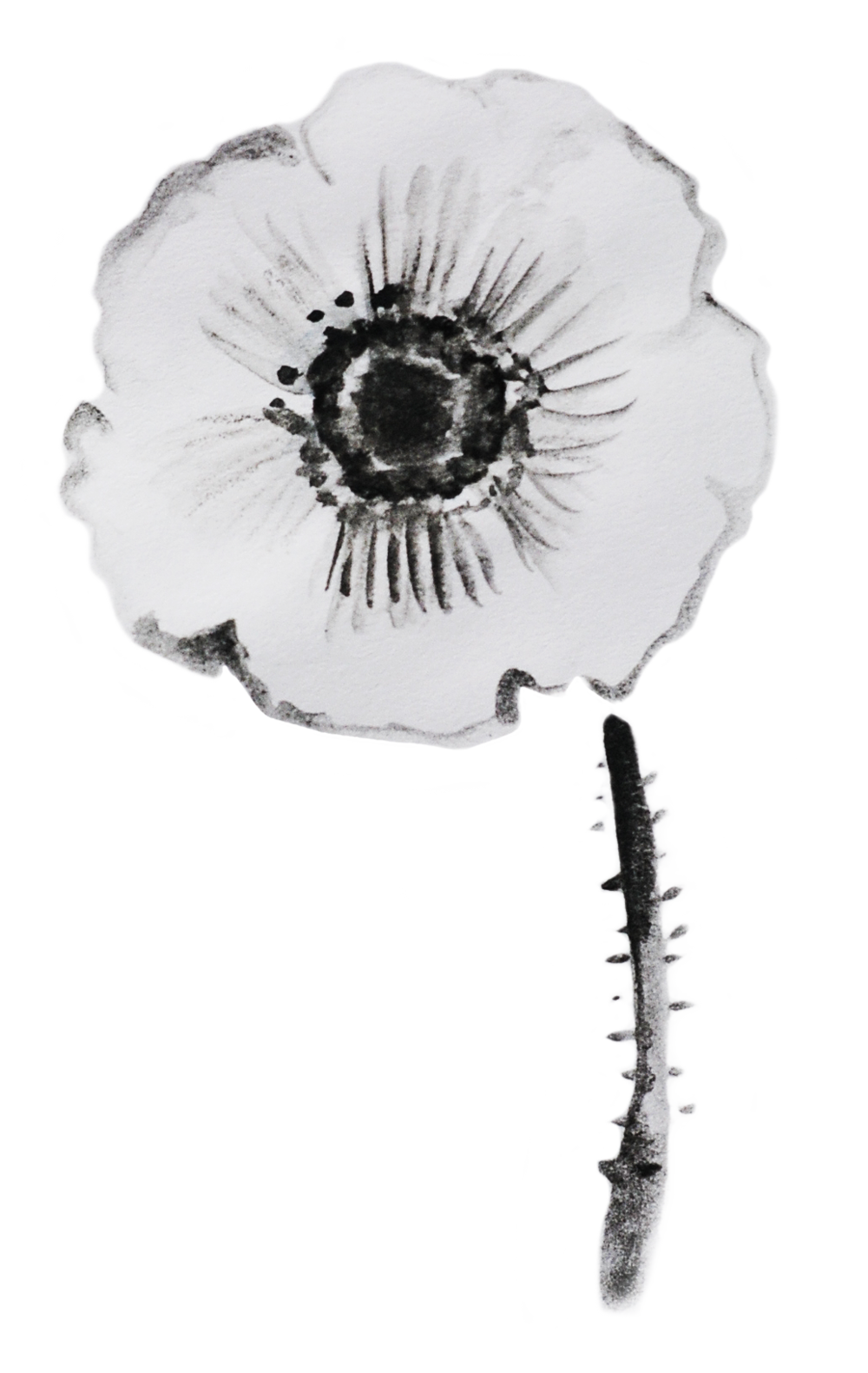 anemone-transp.png