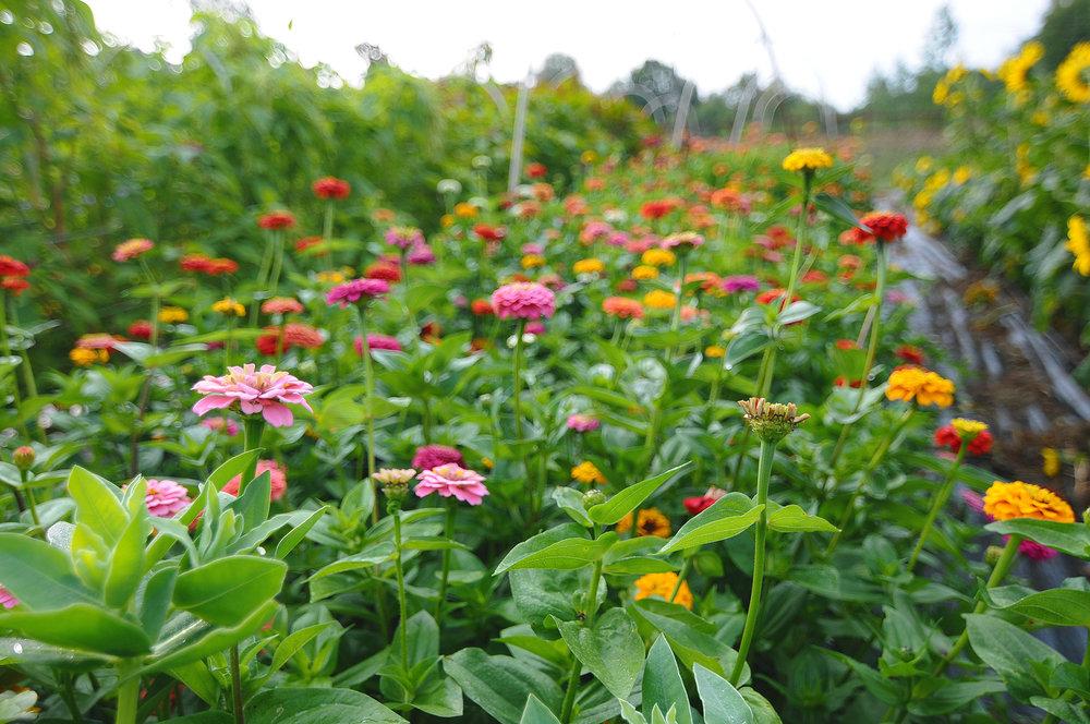 Självplock av blommor - läs mer om det här nedanför