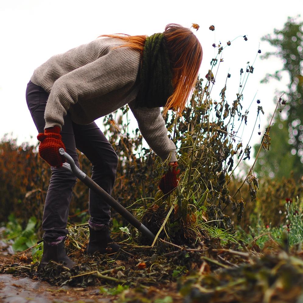 Har man tung jord kan detta vara en riktigt jobbig syssla! Var försiktiga med era kroppar och ryggar när ni gräver och lyfter.