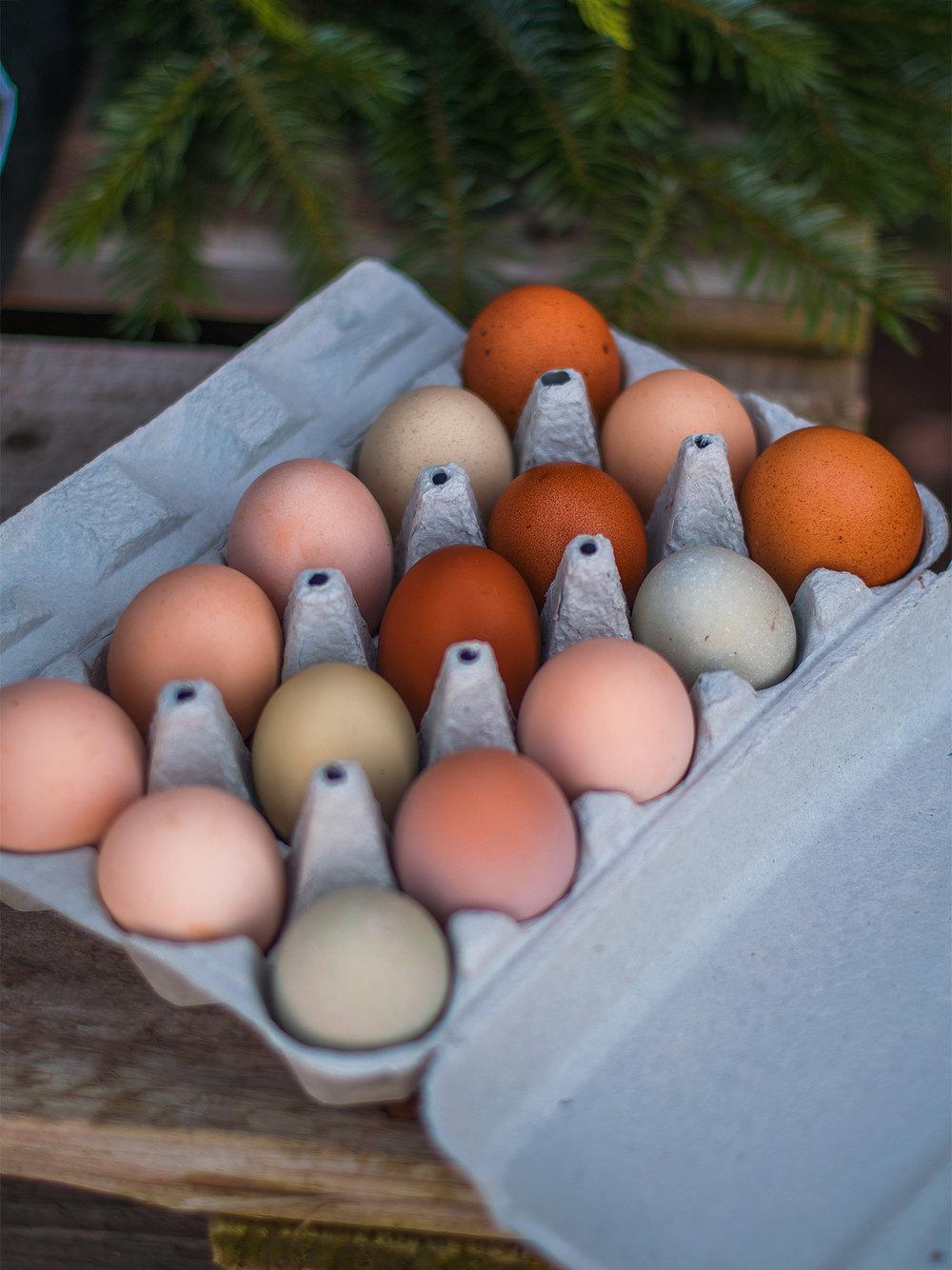 Ägg i regnbågens alla färger från hönsen på gården