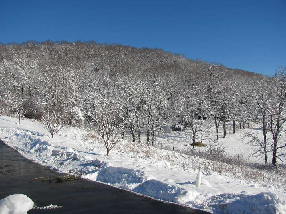 It doesn't often snow in southwest Virginia, but when it does, it is beautiful!