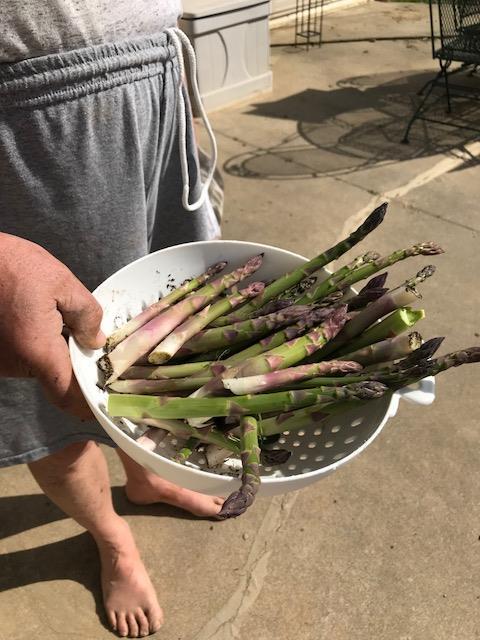 first asparagus.jpg