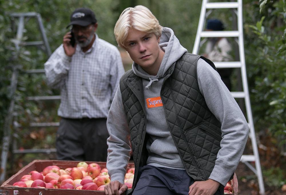 harvesting apples Summerland, BC