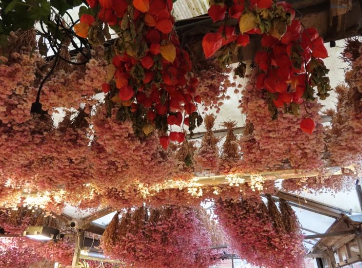 Flower Market _Amsterdam Netherlands_ K. Martinelli Blog _ Kristen Martinelli _ Digital Marketing & Design.jpg
