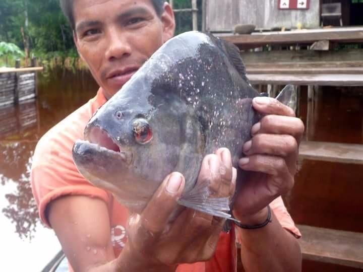 Pirañas Pesca (Fishing)